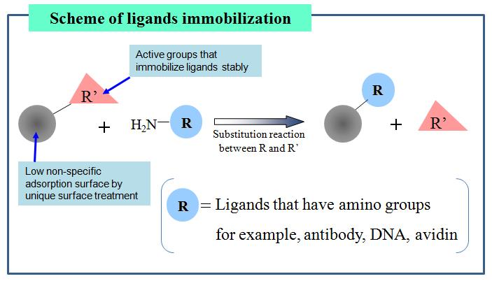 affinity-beads-ligands