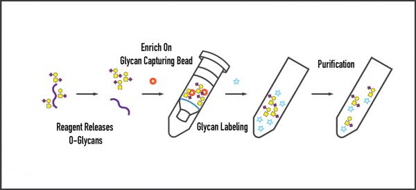 O-Glycan Prep Kit Workflow