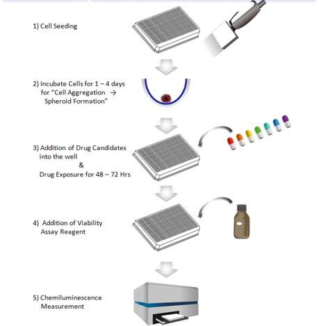 PrimeSurface White Plates Workflow